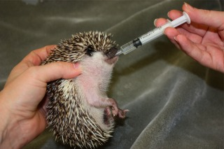 Recommended Hedgehog Veterinarian Listing: Hedgehogs United